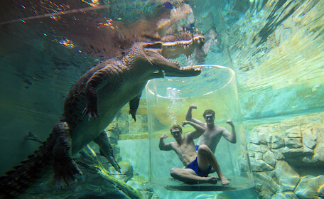 large crocodile in water while two men sit in tank underwater