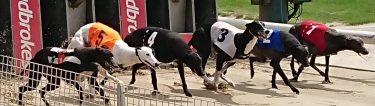 group of bucks watching greyhound racing