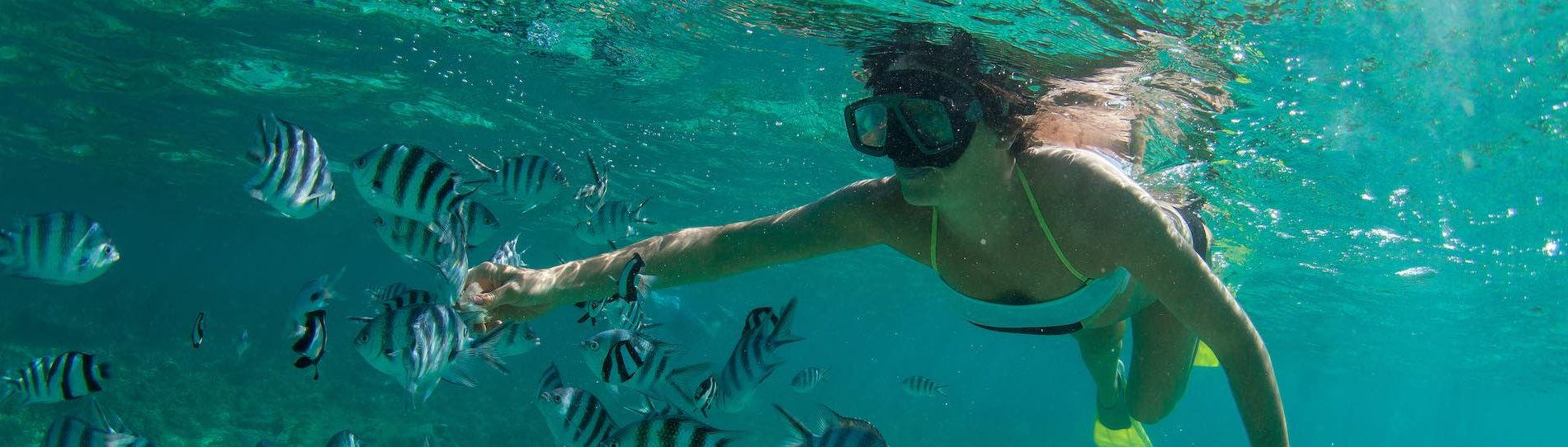 buck snorkelling with fish at airlie beach