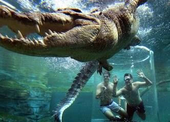 bucks croc swim experience
