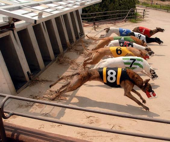 grey hound racing bucks party sydney