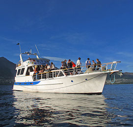 boat party cruise queenstown stag party idea