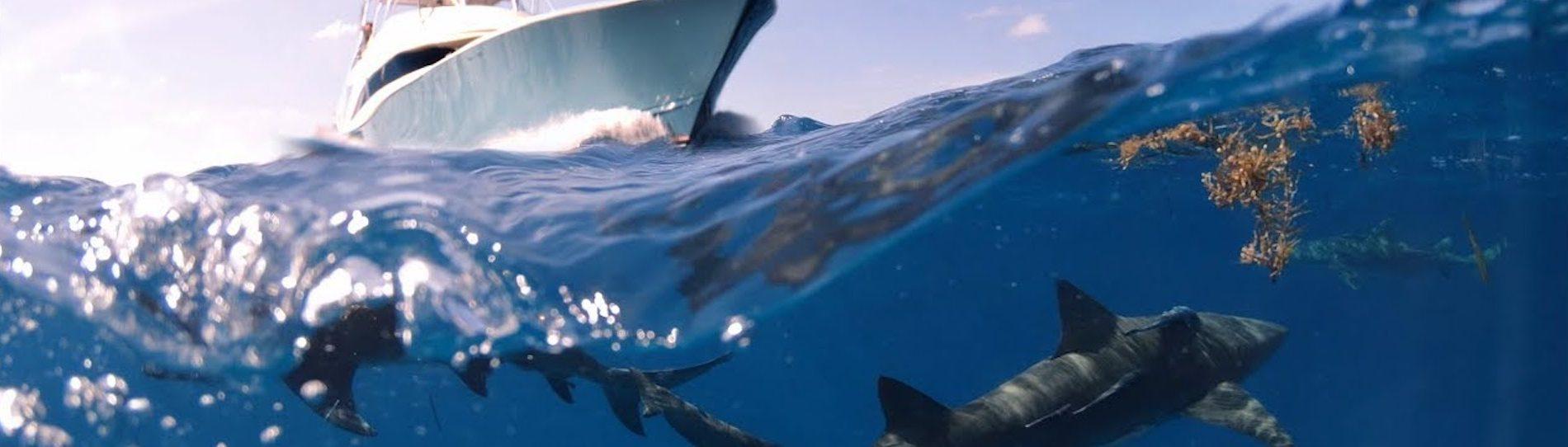 bucks deep sea fishing taupo