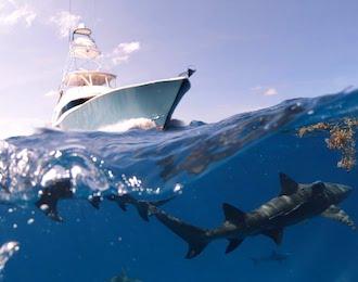 bucks deep sea fishing trip taupo