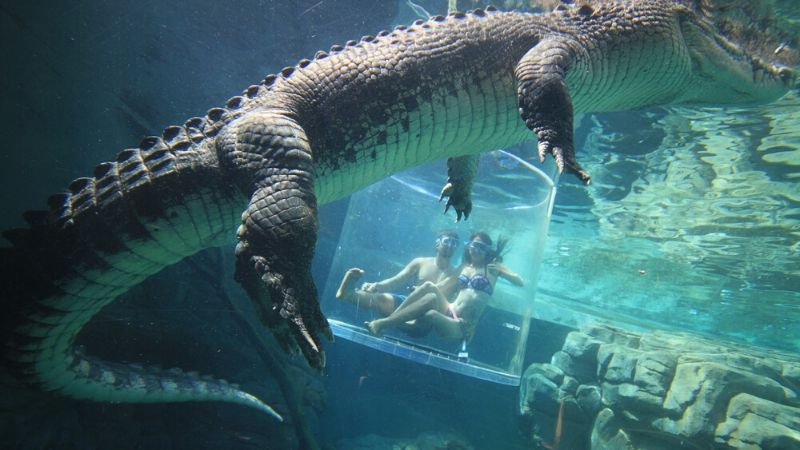 top things to do in darwin crocodile cage experience