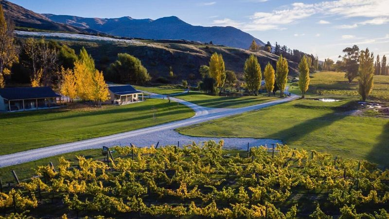 top things to do in queenstown wineries
