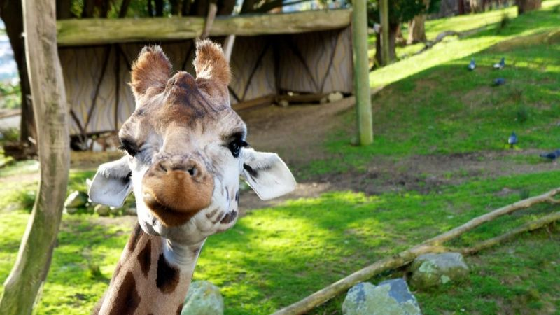 top things to do in wellington the wellington zoo