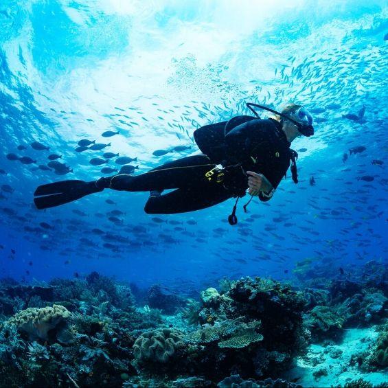 activities to do in bay of islands scuba diving