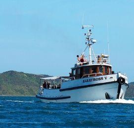 bucks cruise bay of islands