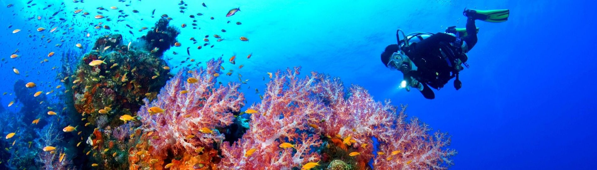 scuba diving or snorkeling in bay of islands new zealand