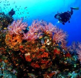 scuba diving in bay of islands activities