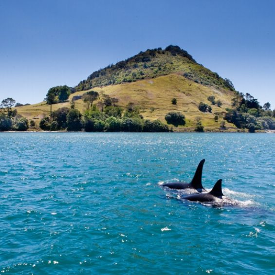 bucks activities tauranga cruise