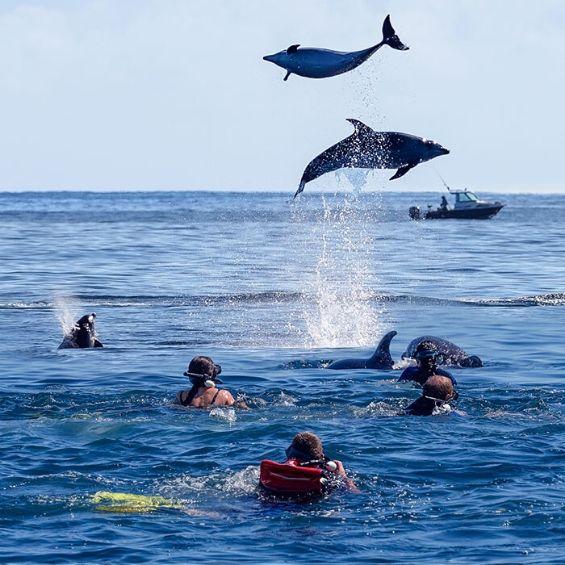 activities bucks tauranga swim with the dolphins