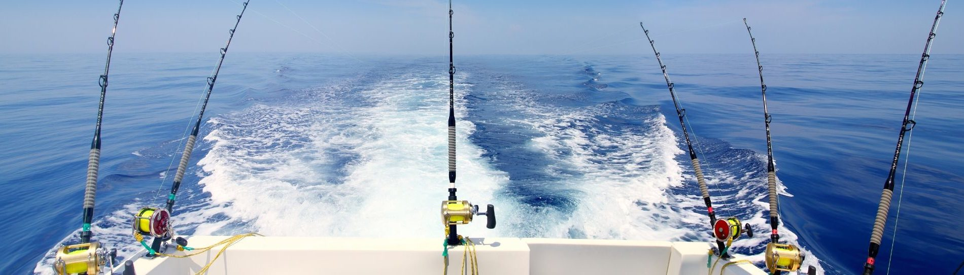 fishing trip tauranga