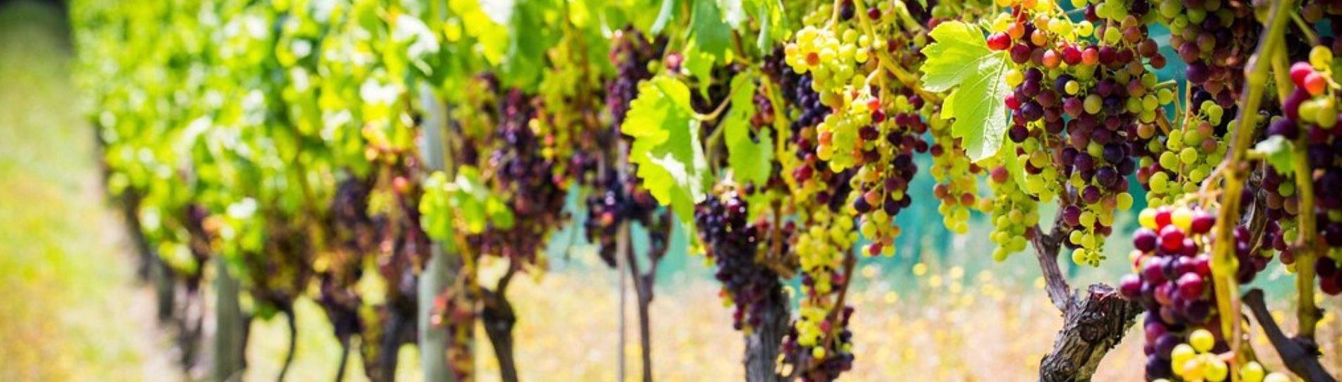 tauranga bucks winery tour nz