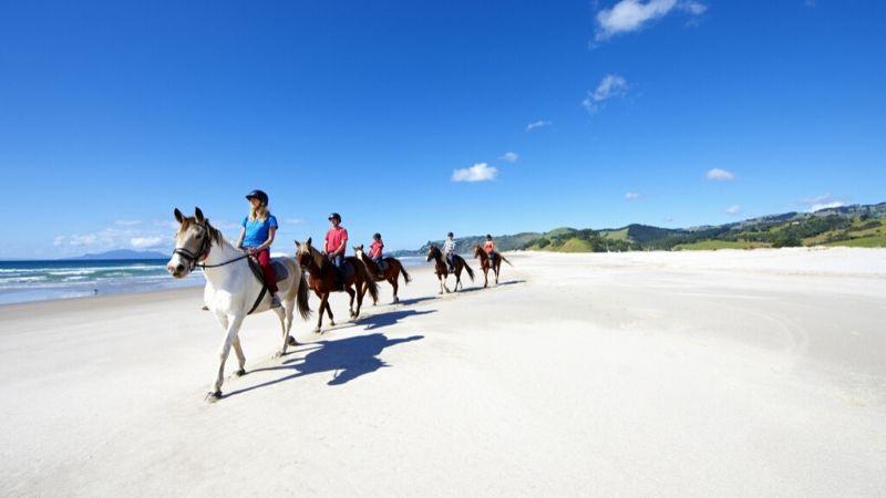 pakiri beach auckland attractions wicked bucks