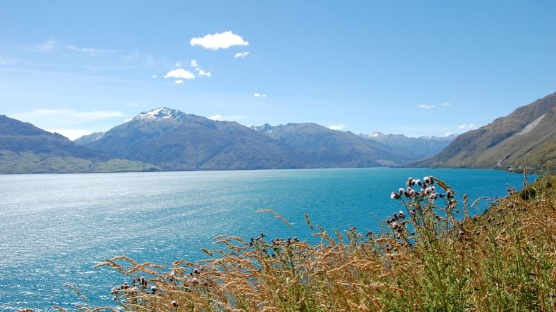 lake wanaka wicked bucks attractions