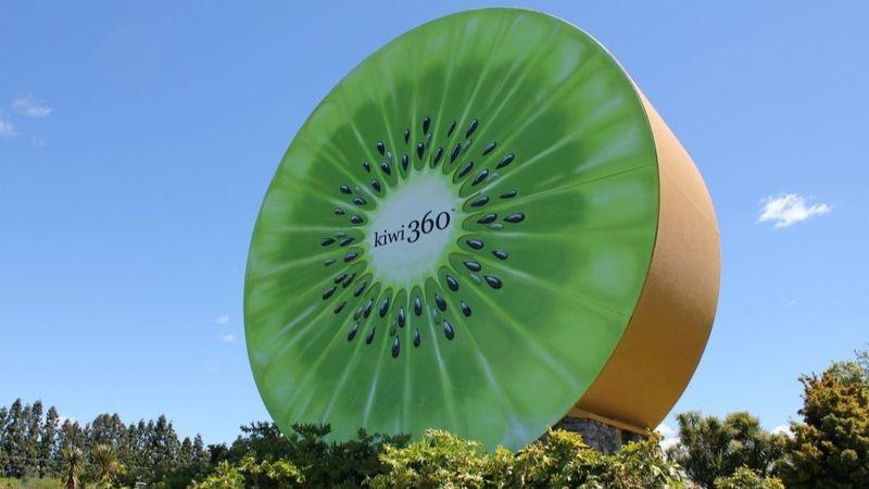 te puke home of the giant kiwi fruit