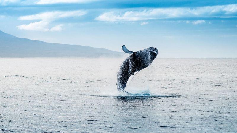 whale watching cruises tauranga